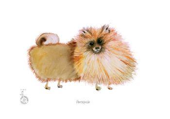 Fun Dog Cartoon Print - Pomeranian